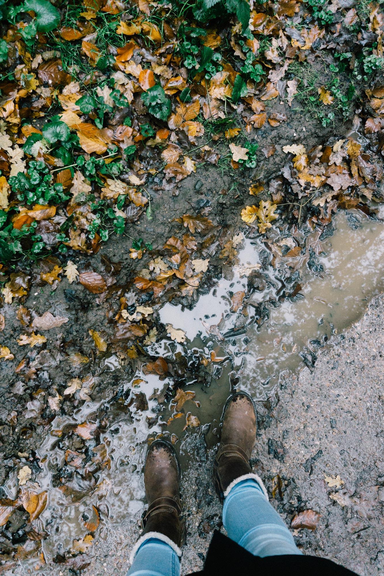 Nationaal Park Zuid-Kennemerland in de herfst 🍁